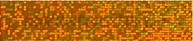 Magnetický pásik 600 x 15 mm - trblietavo oranžový